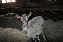 kitsed_lambad_karala_veebruar-2008-047